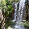 Palma_Aquarium-La_jungla